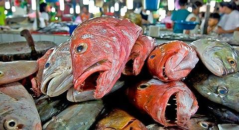0608%20dead%20fish.jpg