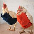 chickpleapicthumb.jpg