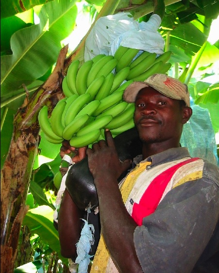 fairtradebananas-1final.jpg