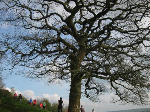 tree%20pic.jpg