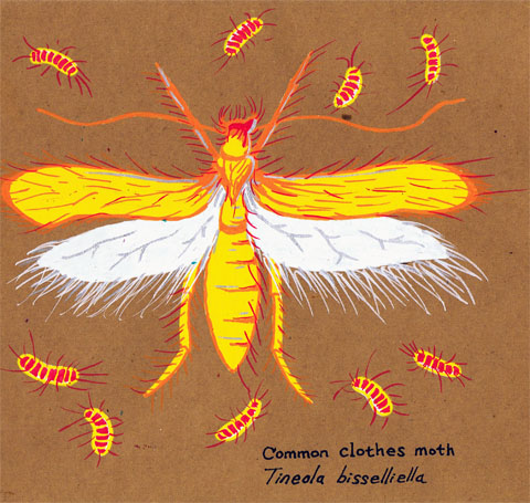 Kevin-Bradshaw-Clothes-Moth
