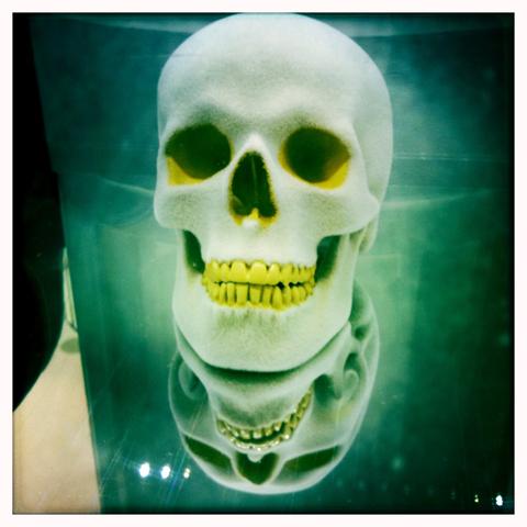 WolfandBadger skull