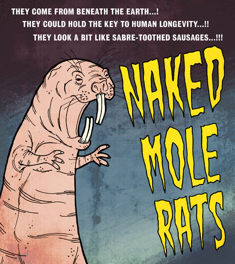 naked mole rat by Paul Shinn
