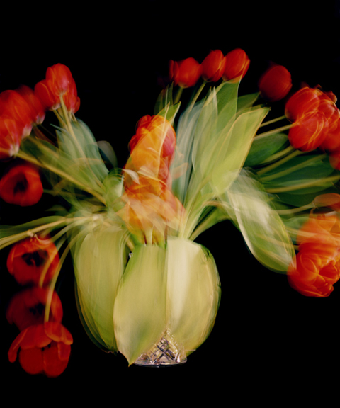 Chris Spackman tulips