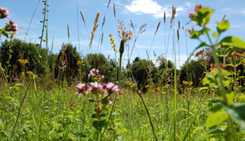 Sustainability Centre meadow