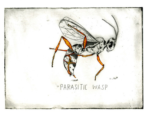 tamsin nagel parasitic wasp