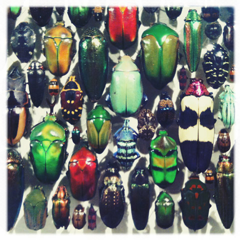 Montreal, Canada 2011 -insectarium
