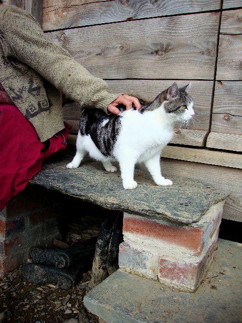 Tir y Gafel Cat