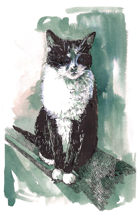 Tallulah pet portrait commission by Faye West