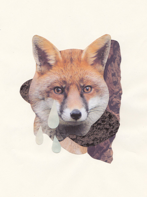 Foxes! by Zoey Hardwick