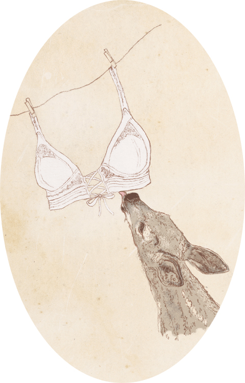 Charini S/S 2012 illustration by Laura Griffin