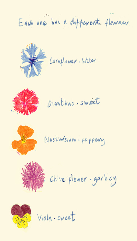 The Flower Appreciation Society Anna's edible flower illustrations