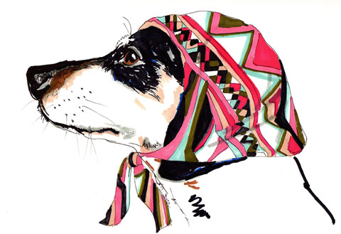 Pooch In Pucci by  Jo Chambers