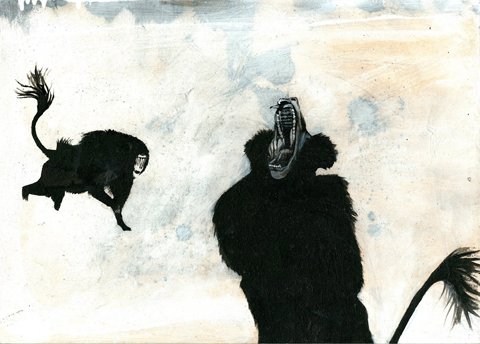 Baboon by Charlie Rawlings