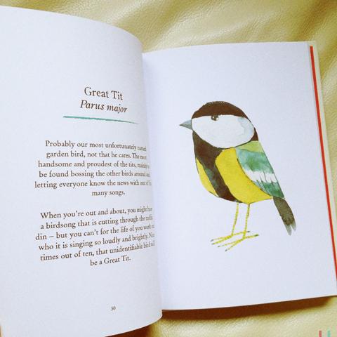 our garden birds matt sewell