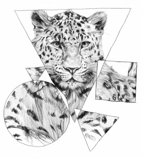 Ohh Deer, Jamie Mitchell illustration