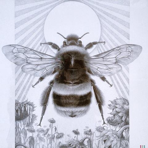 Carim Nahaboo bumble bee