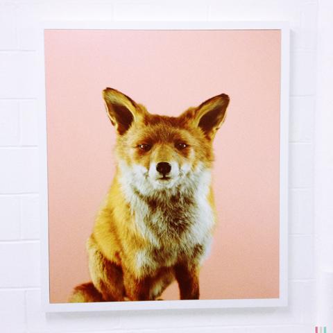 Free Range photography 2014-Nicoline Vormedal Sandwith fox