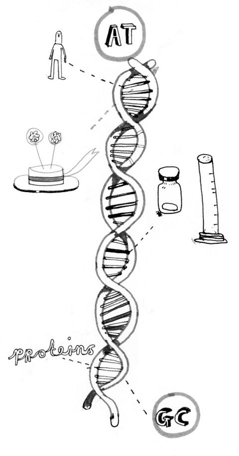 Liv Bargman-DNA