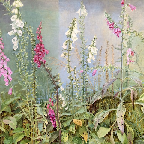 Foxgloves by Jane Wormell