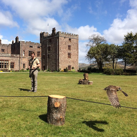 Lake District Muncaster Castle hawk experience