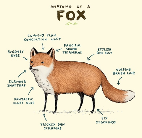 Sophie Corrigan - anatomy of a fox