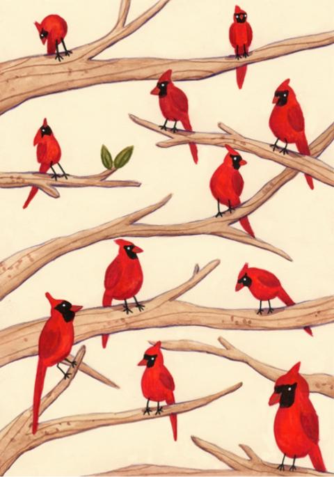 Sophie Corrigan - cardinals