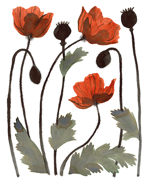 eleanor percival poppies
